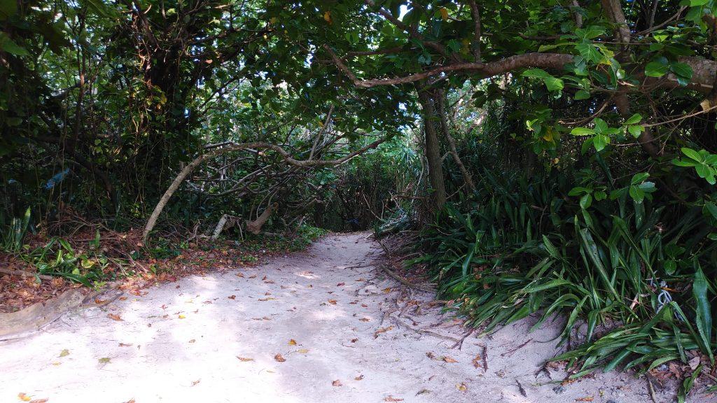 明石海岸の入り口のうっそうとした小径