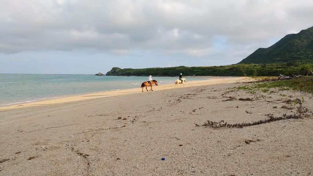 明石海岸と馬