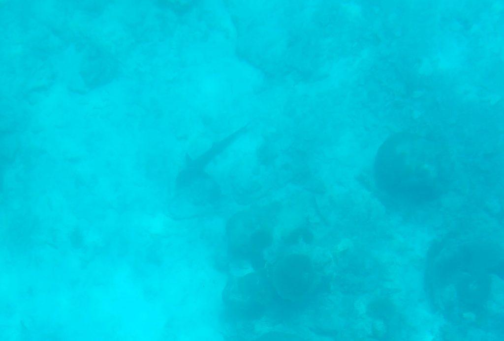 川平湾のグラスボートで見た水深深くのサメ