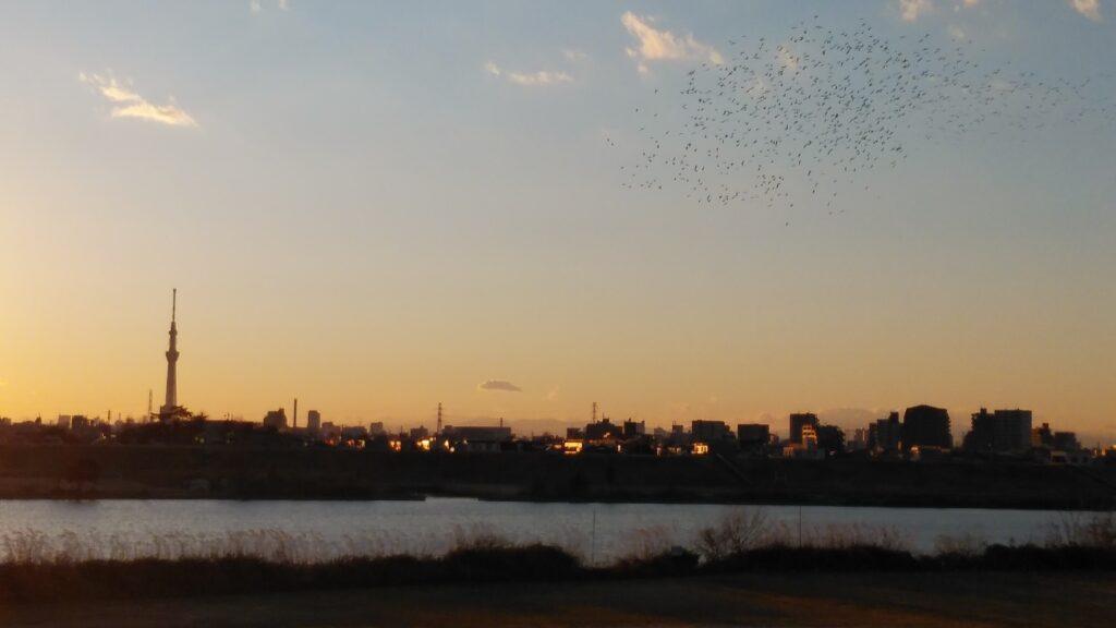 水鳥の隊列とスカイツリーを江戸川河川敷から