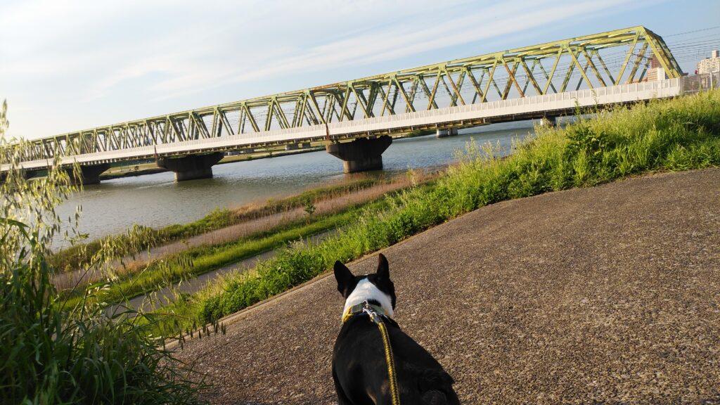 市川から見る市川橋